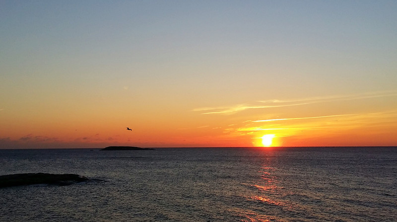 Seagull over Ram Island at sunrise