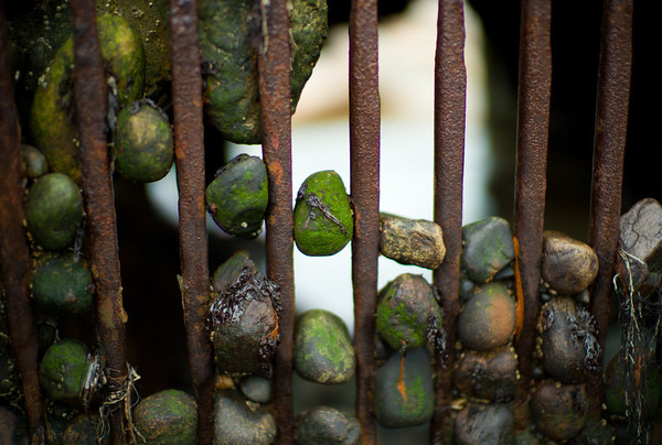 Pebbles stuck in an iron gate at the beach.